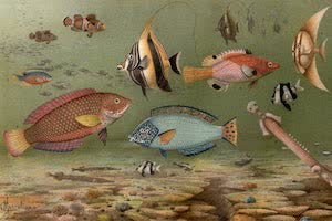 Collections - Fish