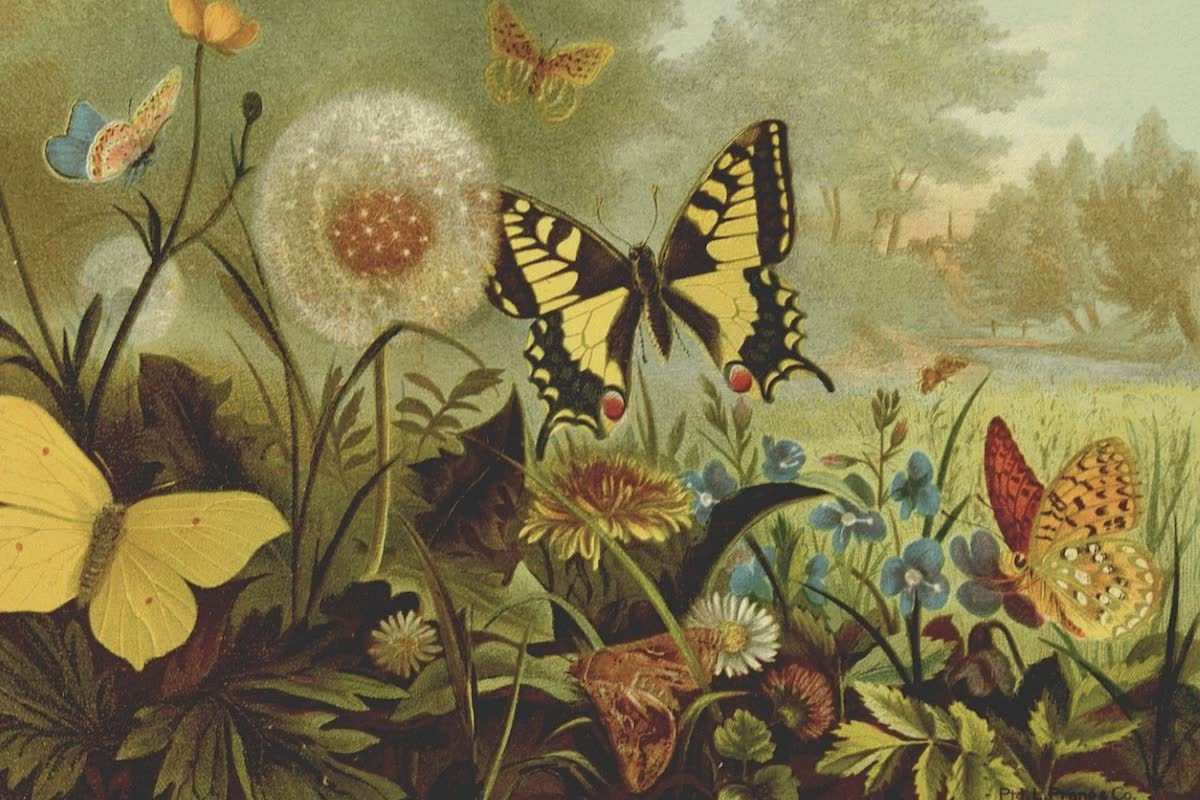 History Archive - Insects Collection