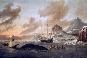 Collections - Spitsbergen
